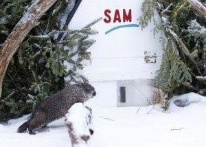 Shubenacadie Sam does not like the polar vortex