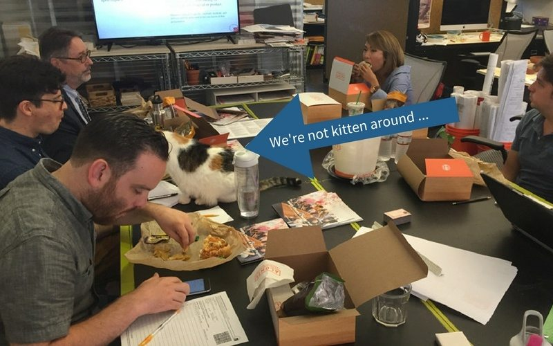 Cat Joins the Lunch & Learn