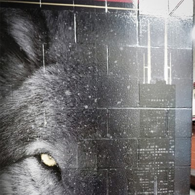 Wolf Wall Graphic Gameplan Creative