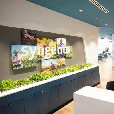 Wall Graphics and Canvas Prints at Syngenta