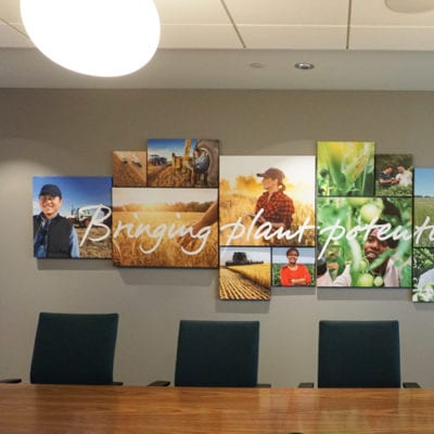 Separate Perspective of Canvas Prints at Syngenta