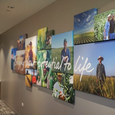 Canvas Prints Installed in Syngenta Conference Room